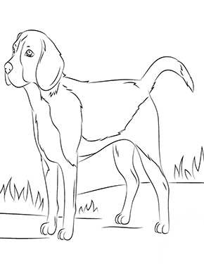 Ausmalbild Beagle In 2020 Ausmalbilder Hunde Malvorlagen Pferde Ausmalen