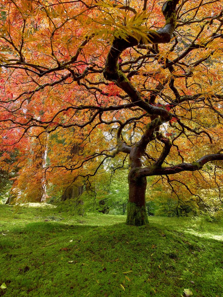 Portland Japanese Garden. | Portland japanese garden and Scenery