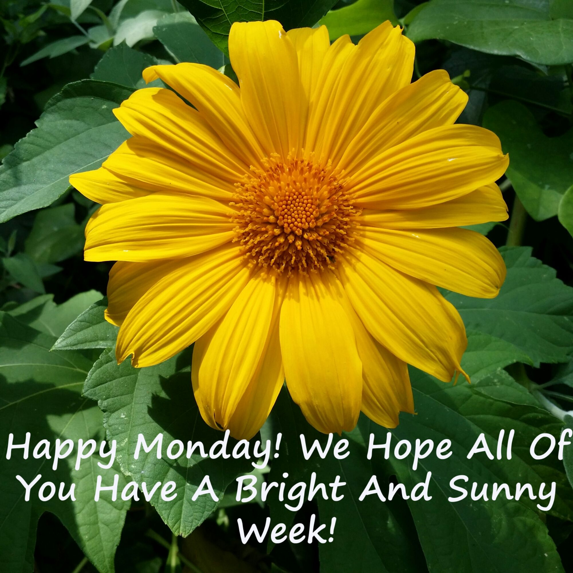 Happy Monday We Hope All Of You Have A Bright And Sunny Week Happy Monday Good Morning Quotes Monday Motivation