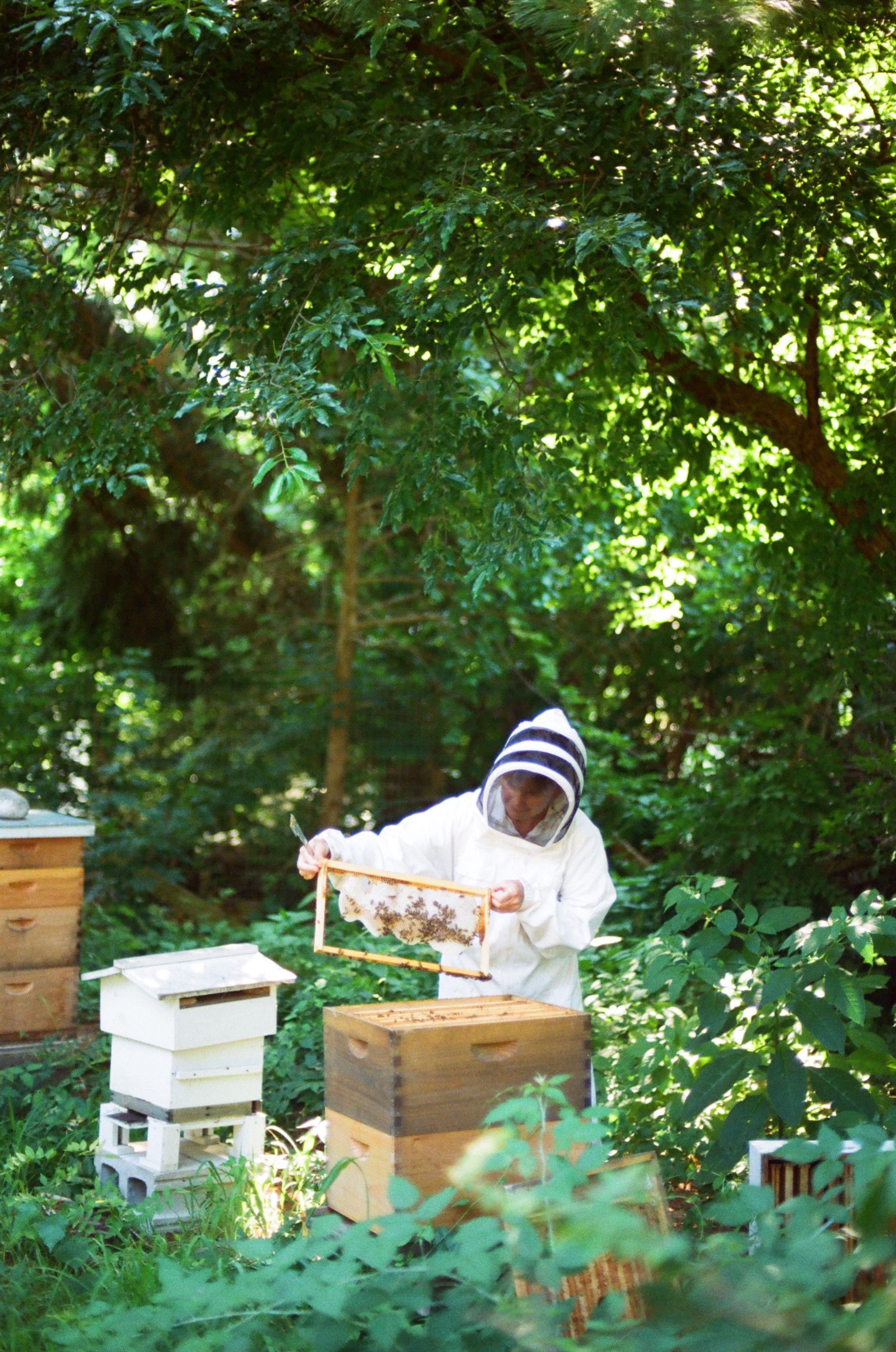 Adventures in Beekeeping: Part 1 (With images) | Bee ...