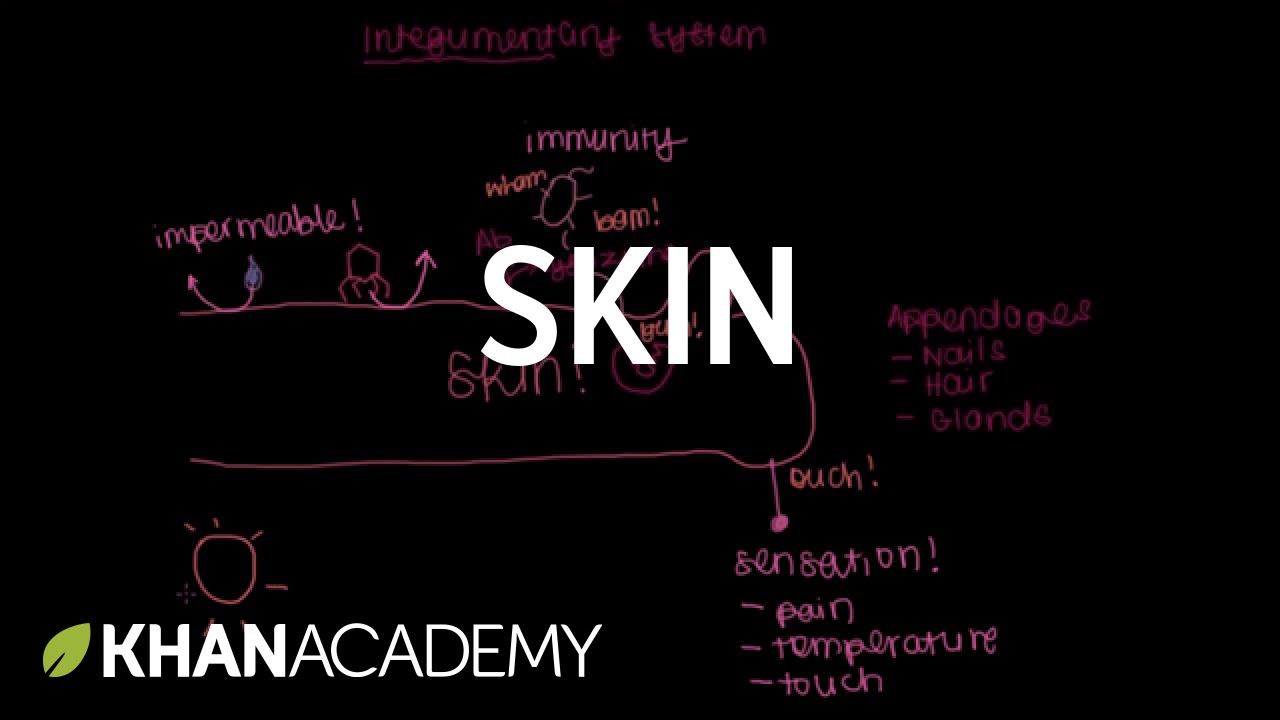 Meet the skin! (Overview) | Integumentary system physiology | NCLEX ...