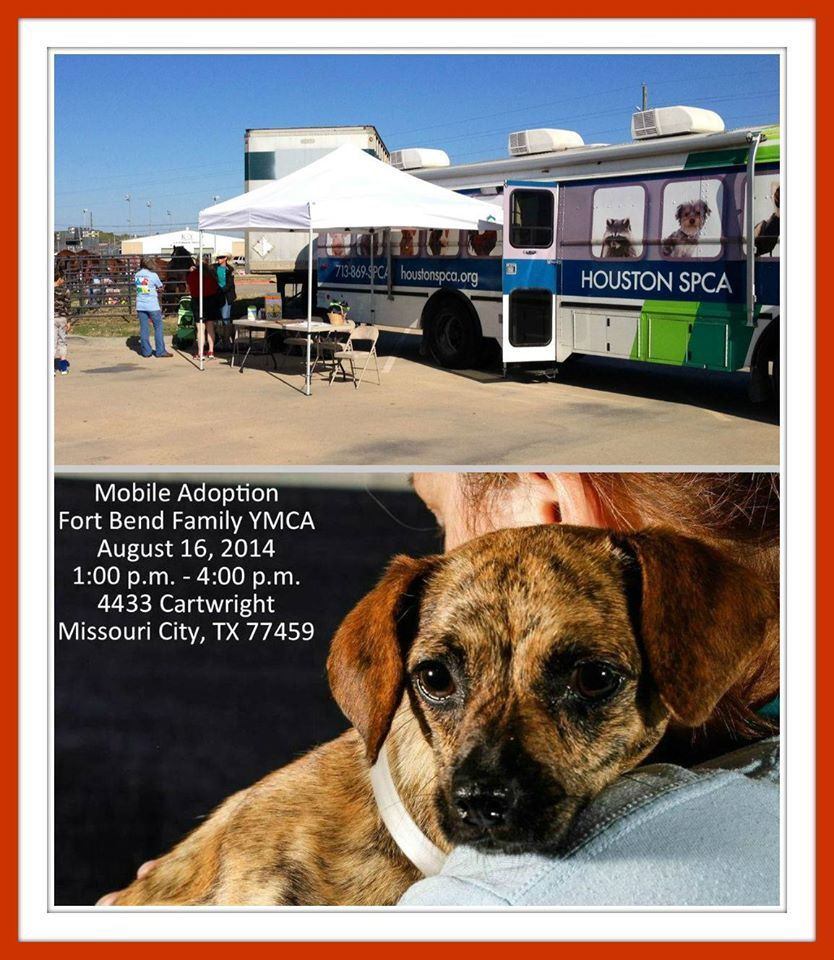 The Houston SPCA mobile adoption bus will be at the Fort