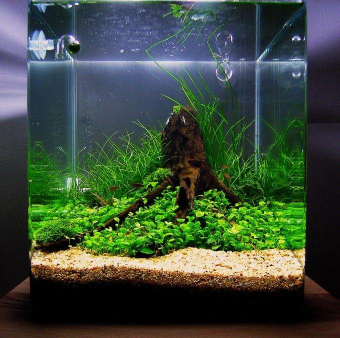 830 Foto Design Aquascape Simple Terbaik Untuk Di Contoh