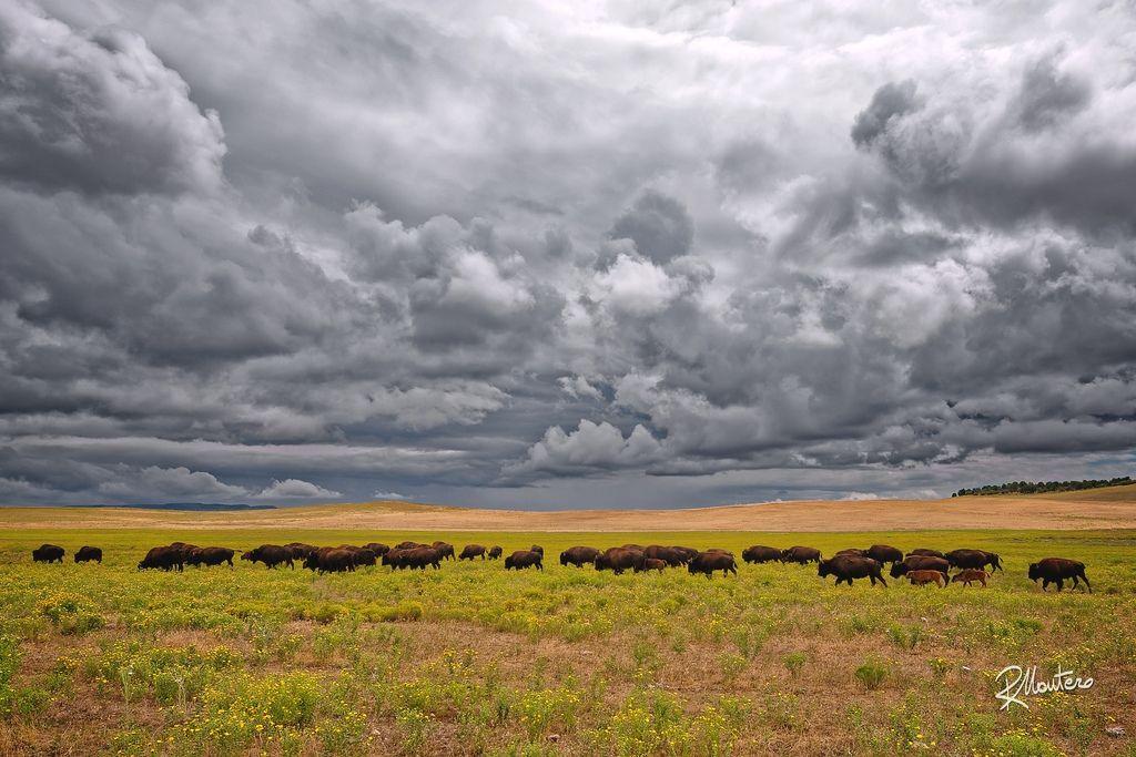 Prairie Photo Grouping