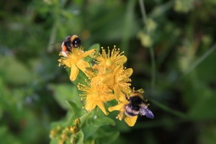 How To Get Rid of Bees   Sweat bees, Getting rid of bees ...