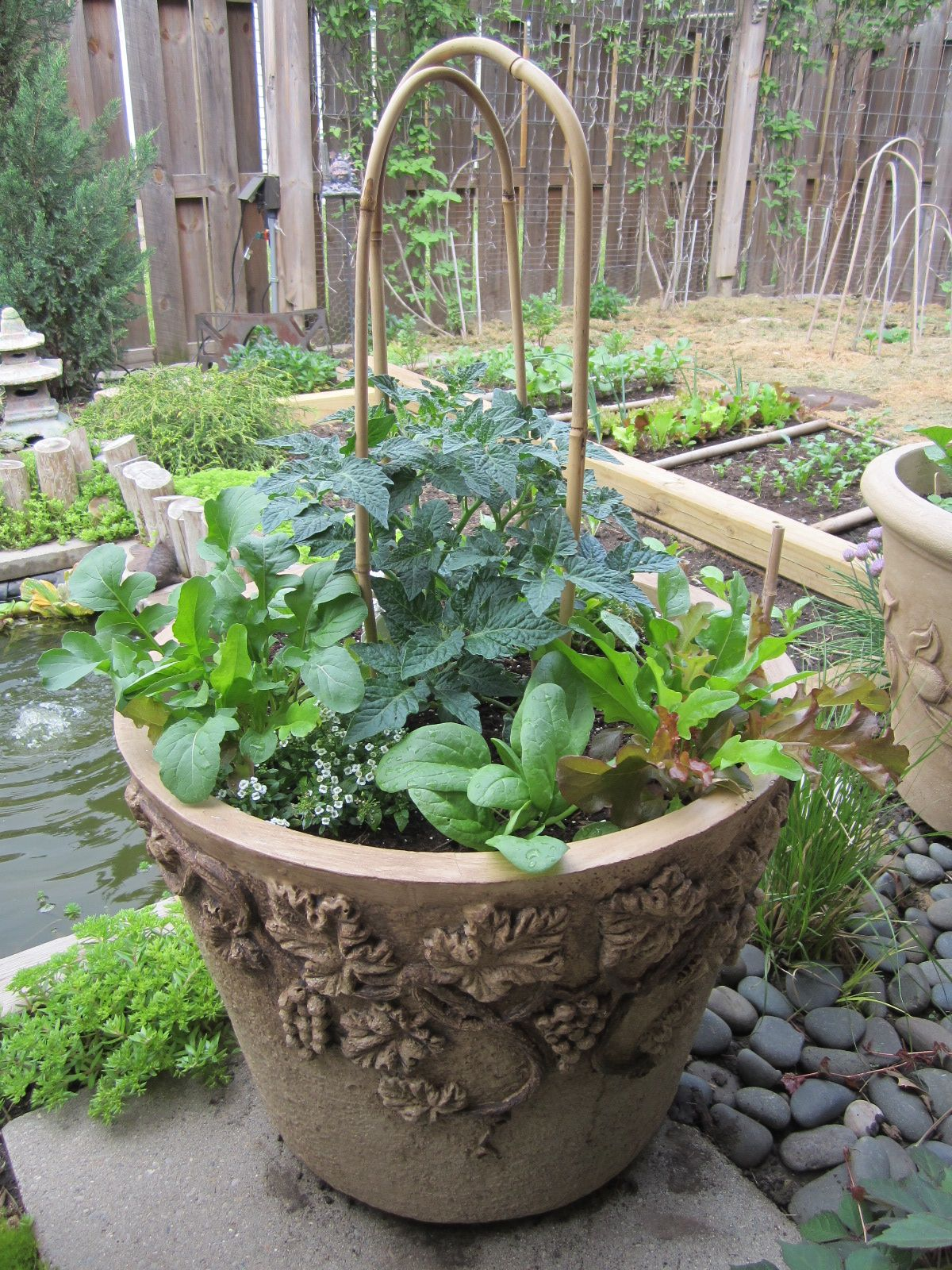 How to grow tomatoes with other veggies all in the same pot! #PrettyVegetablesInPots #ContainerGardeningWithVegetables
