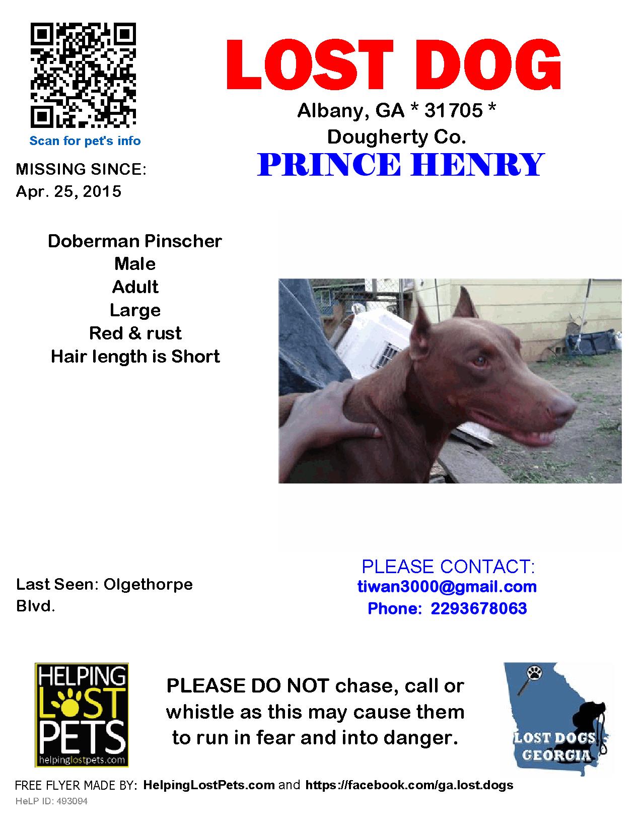 Lost Dog - Doberman Pinscher - Albany, GA, United States | Lost