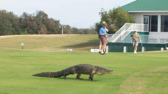 Places To Golf Sarasota Florida Sarasota Florida Siesta Key Beach