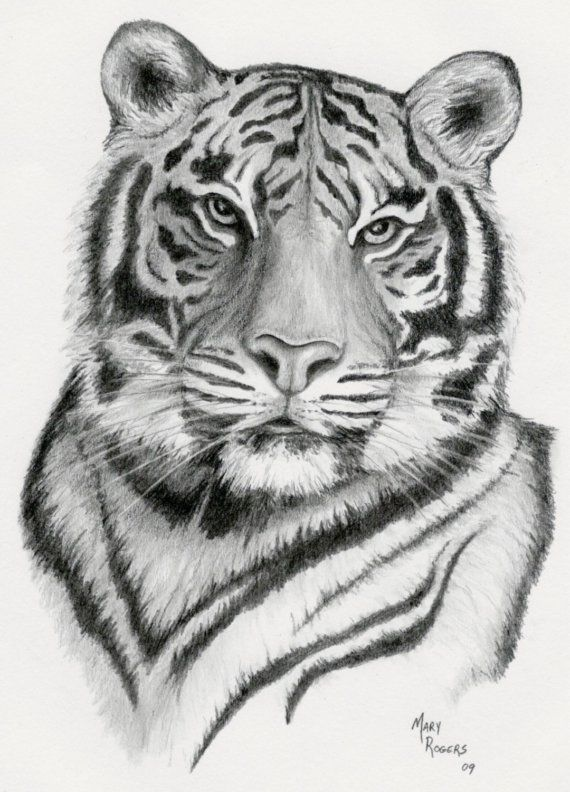 Tiger print of original pencil drawing