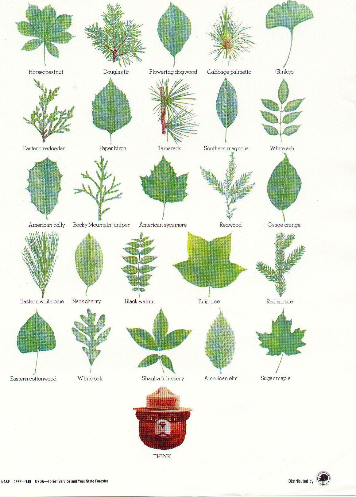 Tree Leaf Identification Leaf Identification Nature Posters