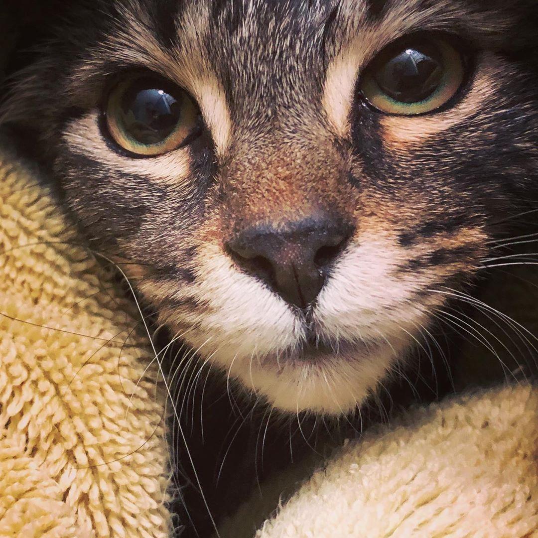 How To Decode Your Cat S Behavior In 2020 Crazy Cat People Cats Cat Behavior