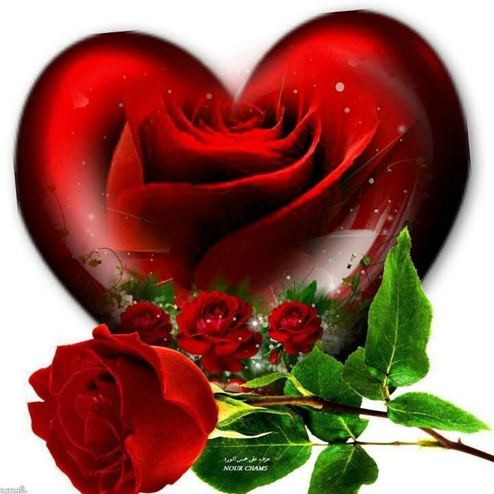Heart And Roses Follow Your Heart Pinterest Heart Love And My