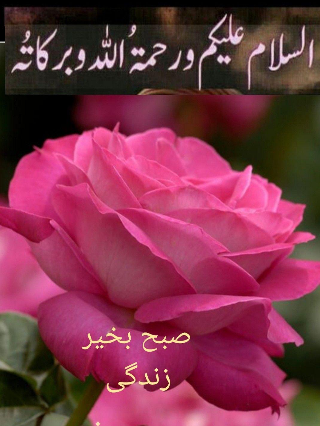 Pin By Safia Habib On السلام عليكم صباح الخير Good Morning Flowers Good Morning Beautiful Quotes Good Morning Messages
