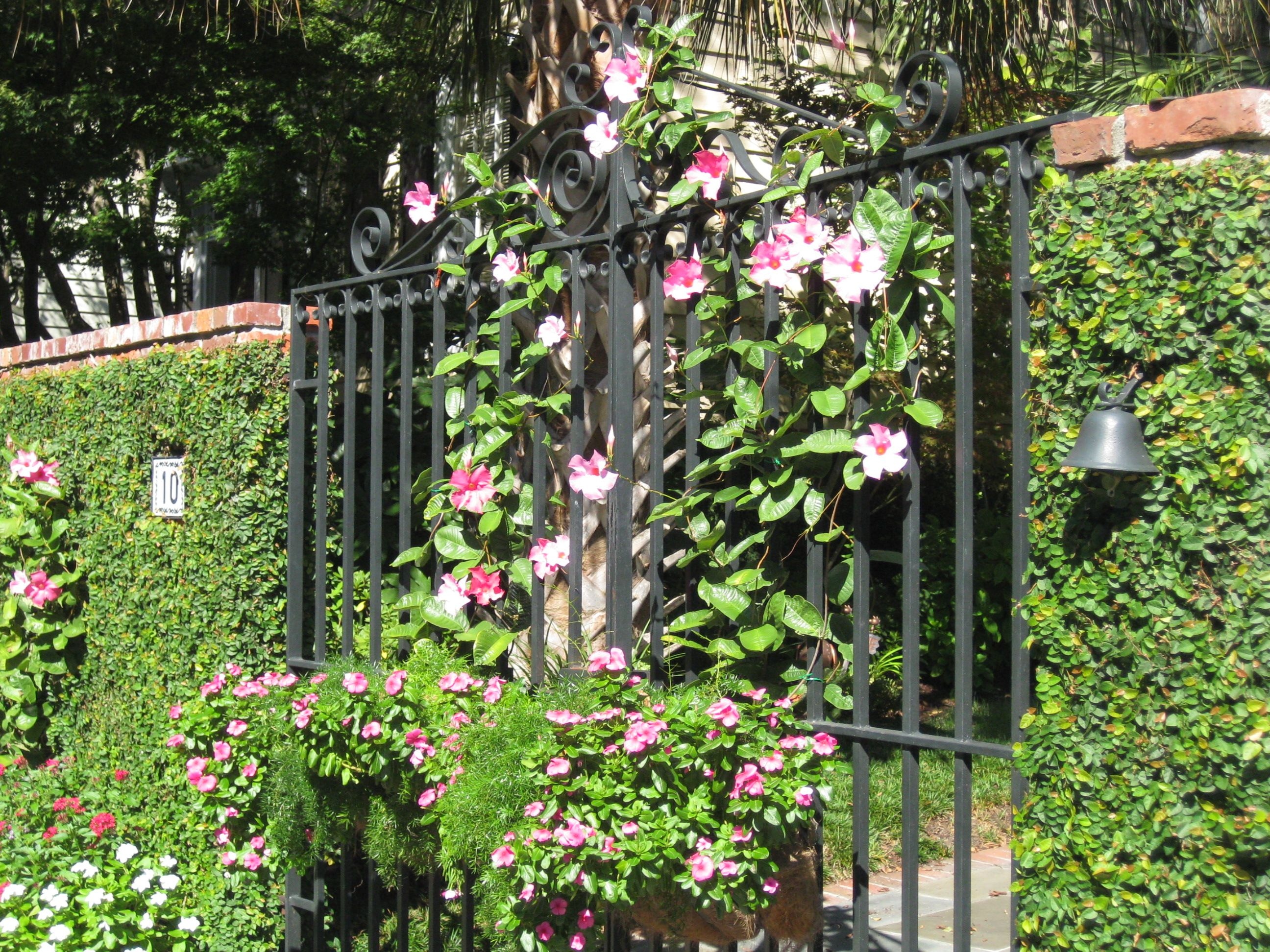 A Wrought Iron Garden Gate With Vine Covered Walls On Each Side