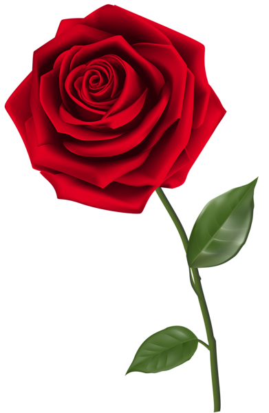 single red rose png clipart image | roses | pinterest | single red