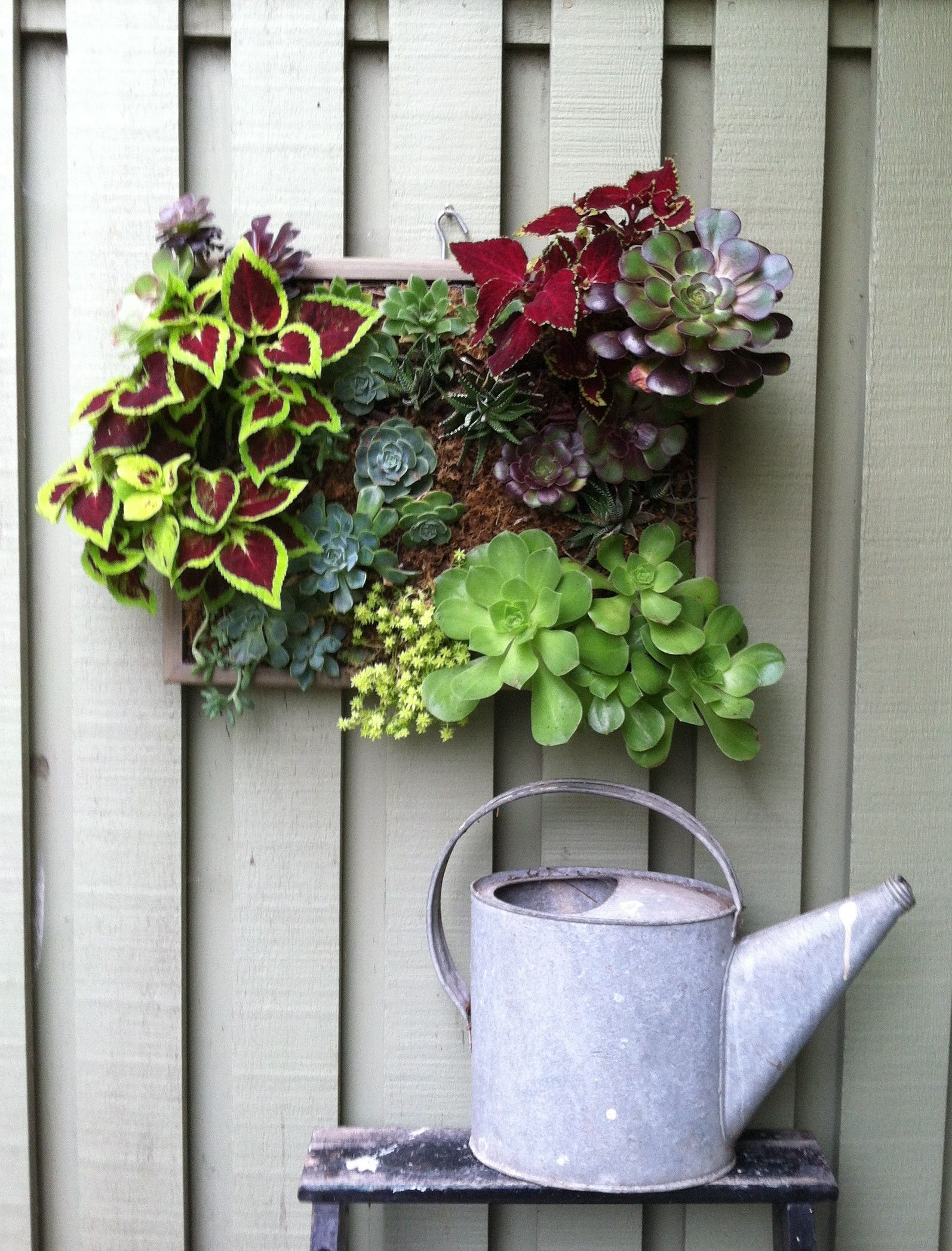 Succulents And Coleus In Frame Live Wall Art