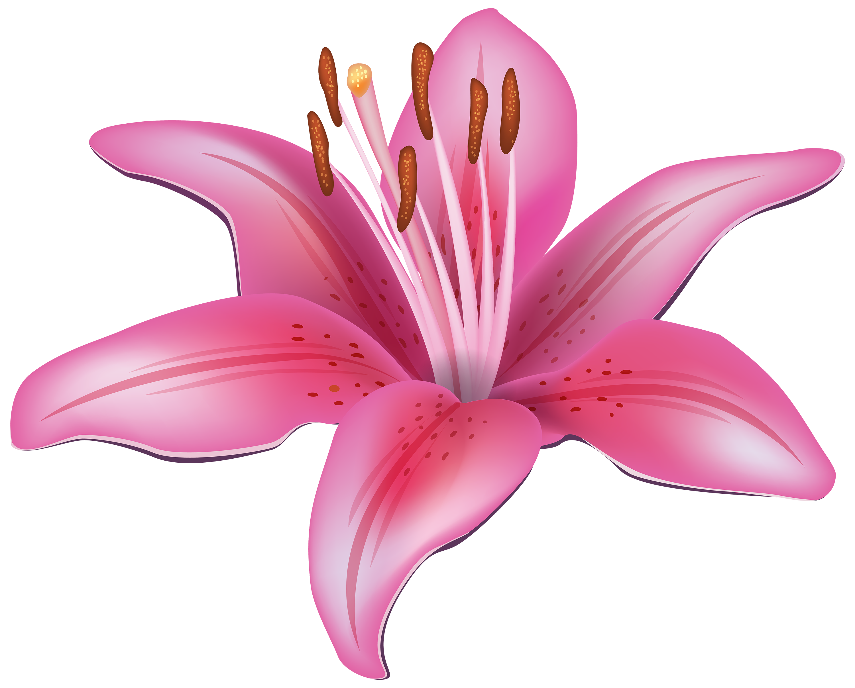 free clip art lily flowers - photo #12