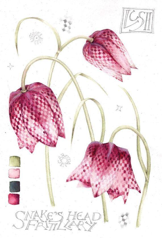 Peinture A L Aquarelle Originale Fleurs Fritillaires De Tete De
