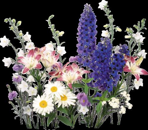 tubes fleurs 4 - Page 6 | Fleurs sauvages, Fleurs, Idée peinture