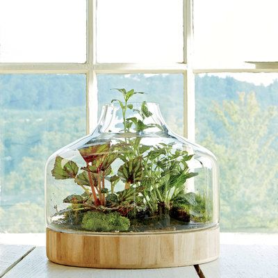 Plant A Little Glass House Indoor Container Gardening