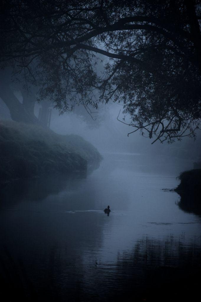....last night dream..........