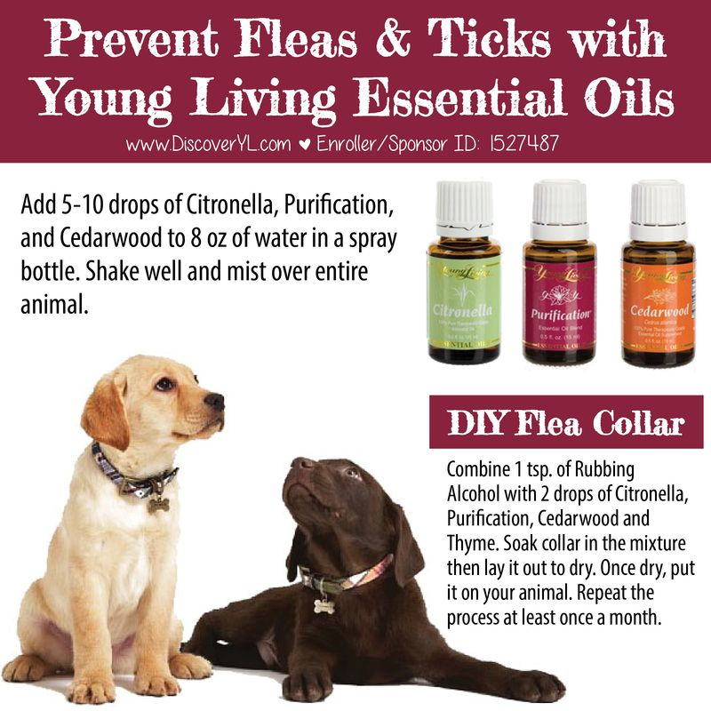 Pin By Judith Bolton On Essential Oils Essential Oils