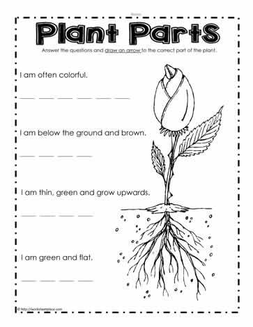 what are the plant parts 4th grade science parts of a plant teaching plants worksheets. Black Bedroom Furniture Sets. Home Design Ideas