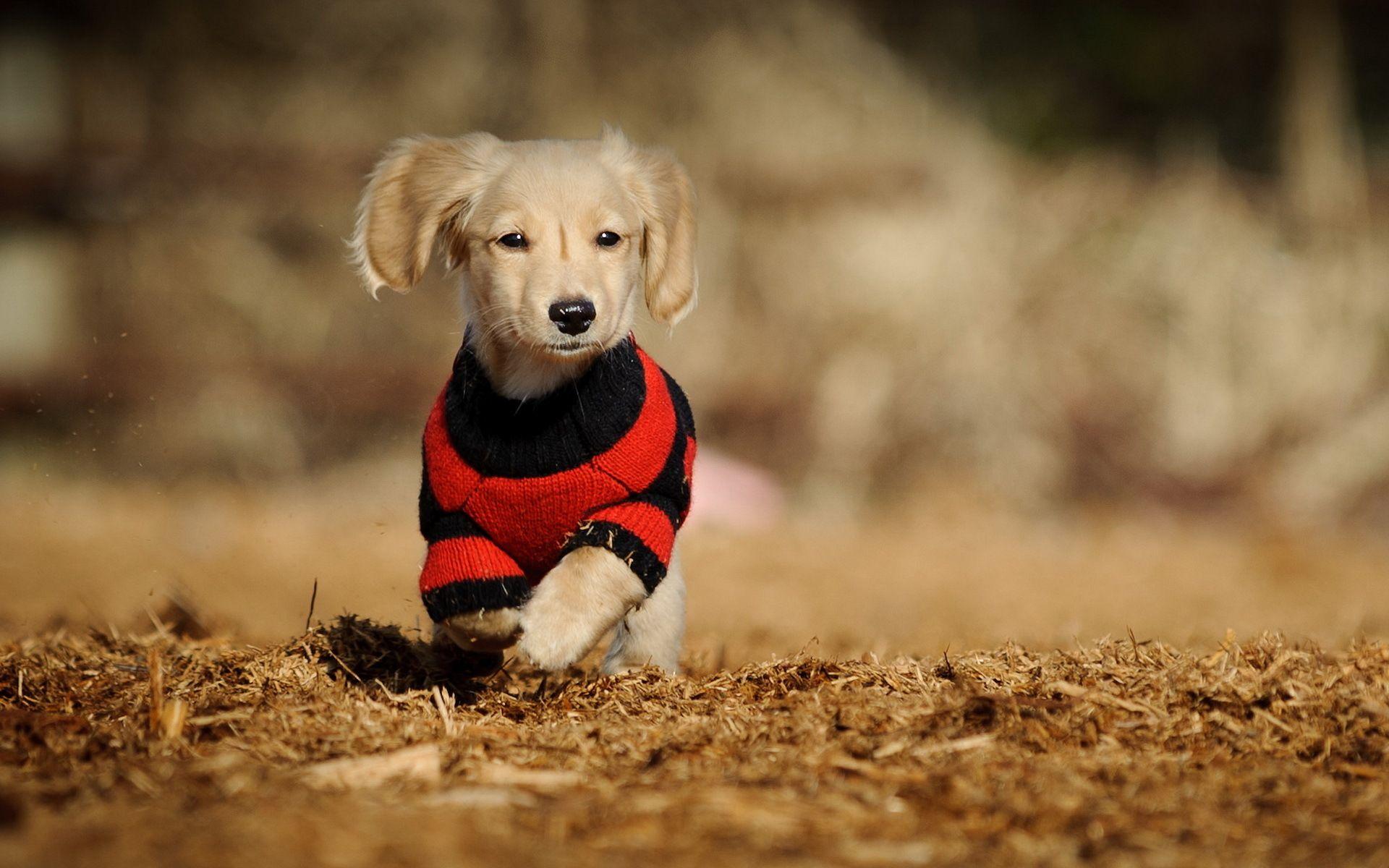 Fantastic Baby Brown Adorable Dog - d8af75d31e5ec41ec39ec72bb757867c  Graphic_933574  .jpg