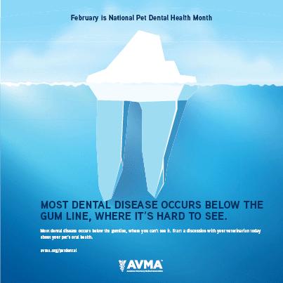 Tolles Video mit einer mündlichen Prüfung und dem Ablauf einer Zahnreinigung für Ihre …   – Dental Month!