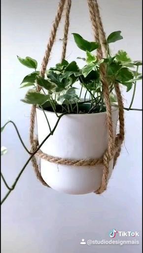 Photo of Plantas suspensas
