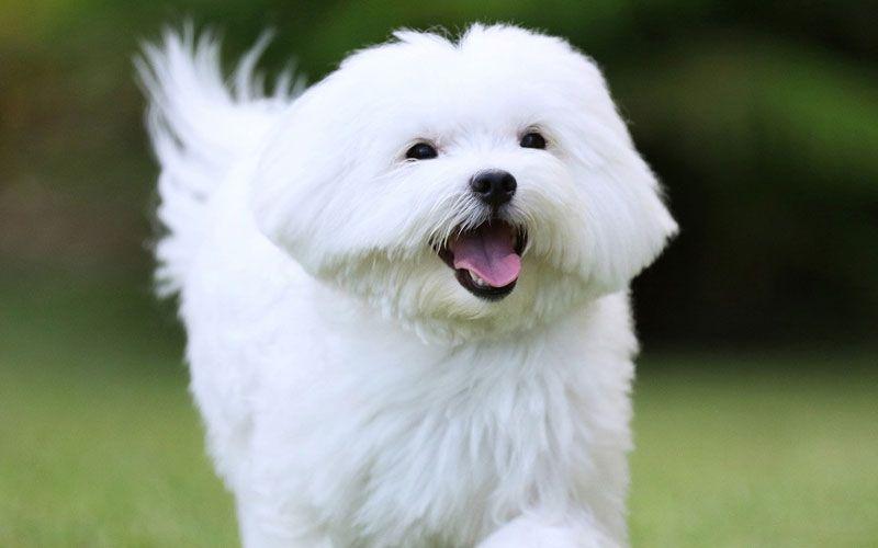 White Dog Names 100 Best Names For White Dogs 2020 Guide White Dog Breeds White Dogs Dog Names