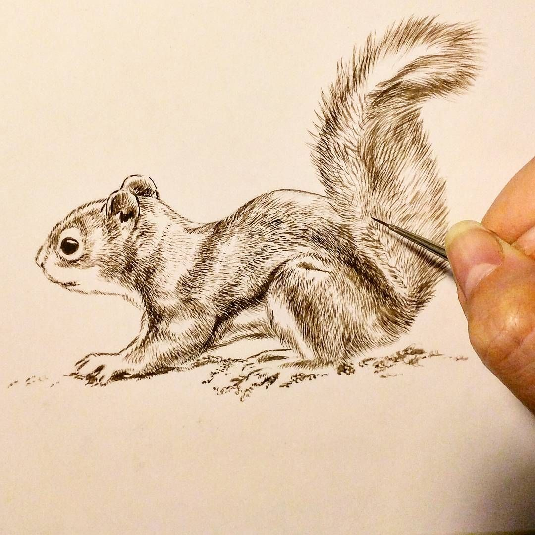 Another new painting of the resident red squirrel Little