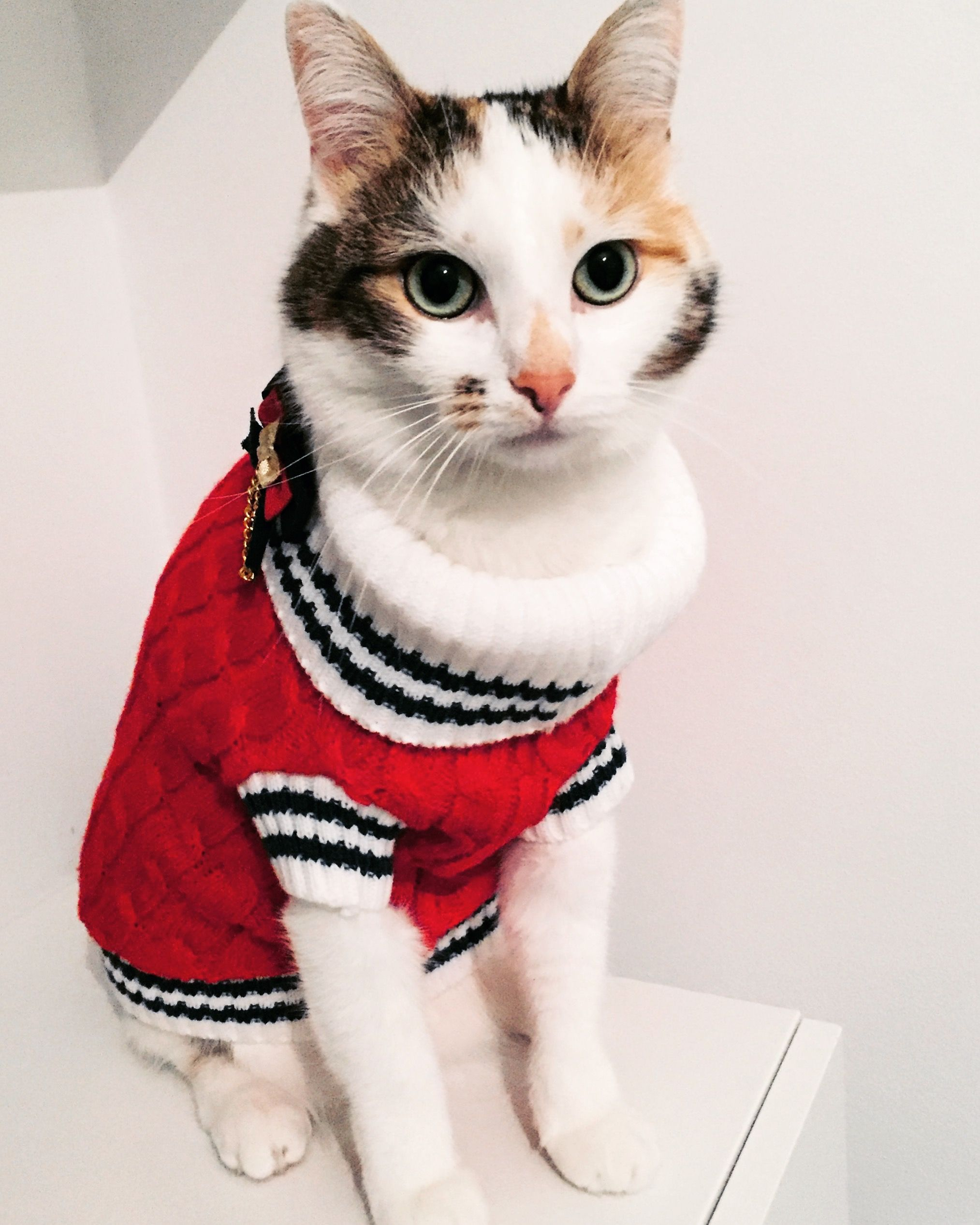 Hundepulli Pullover Für Hunde Sweatshirts Hund Kleidung Hundejacke
