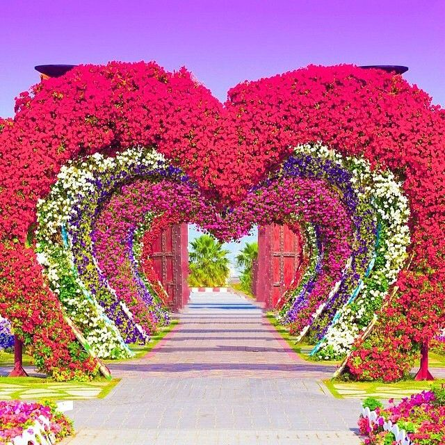 Dubai miracle garden pinteres for Amazing flower gardens