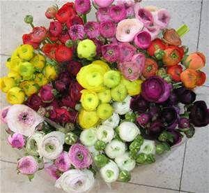 Ranunculus by far my very favorite flowers!!!