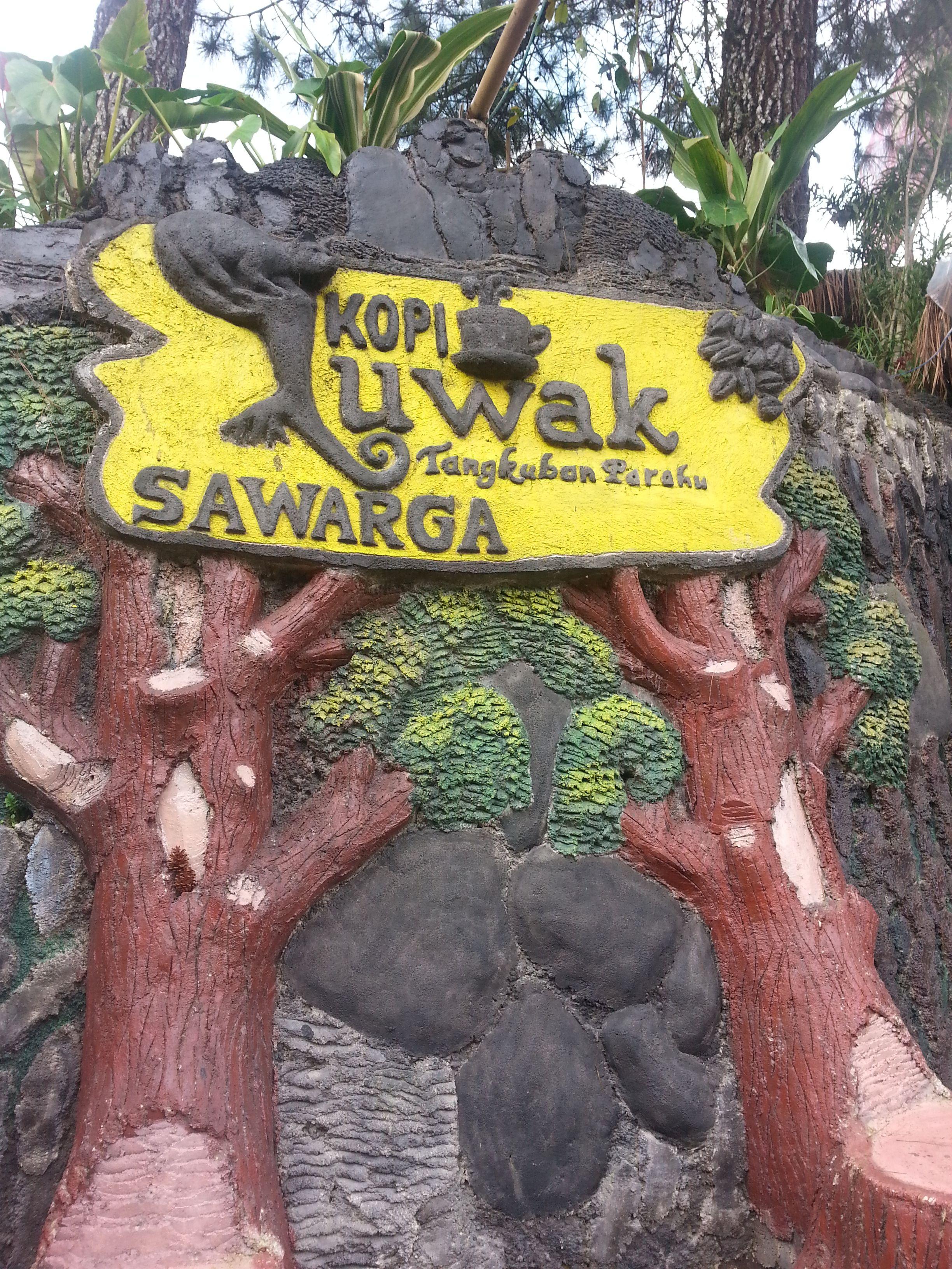 Kopi Luwak / Wild civet coffee farm (Bandung) Marie