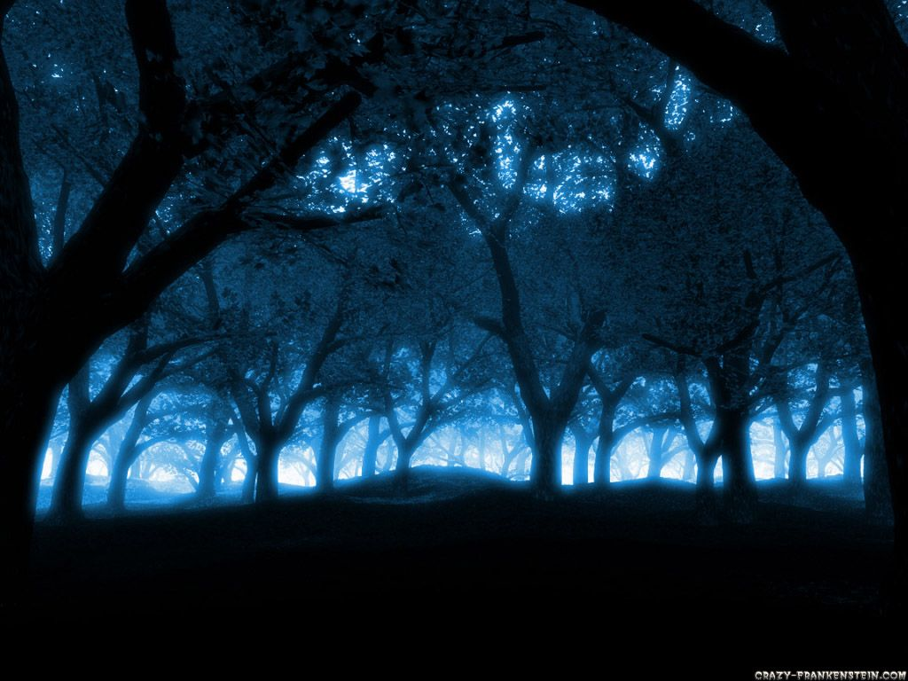 Luminescent Night Forest Trees Connected Together Like Communicating Neurons In The Brain This Image Is An Original Work Of Bosque Fotografia Azul Profundo