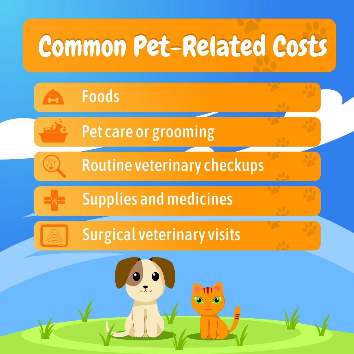 TheInsuredPet 1 Pet Insurance Review Site/Top 8 Best