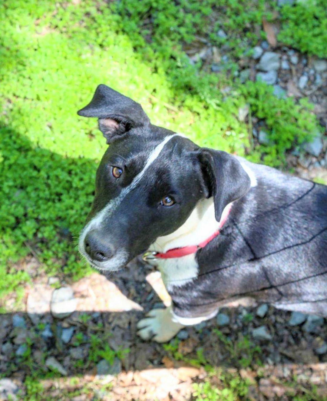 Adopt Rex on Petfinder Lucky puppy, Dog adoption, Dog wound