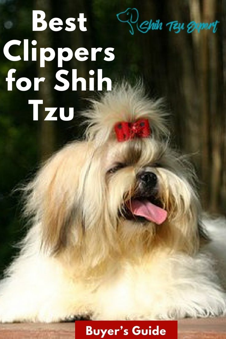 12 best dog clippers for shih tzu 2019 fun easy
