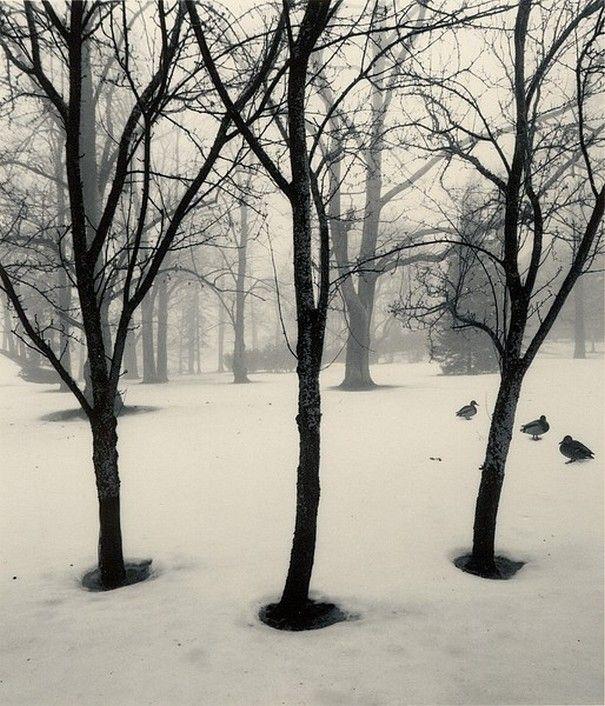 Pentti Sammallahti Helsinki, Finland (Three Trees, Three Ducks), 1996