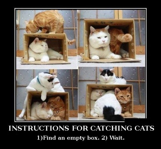 How To Catch Cats Crazy Cats Cute Animals Cat Love