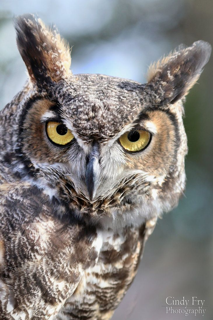 Great Horned Owl by lost-nomad07.deviantart.com on @DeviantArt