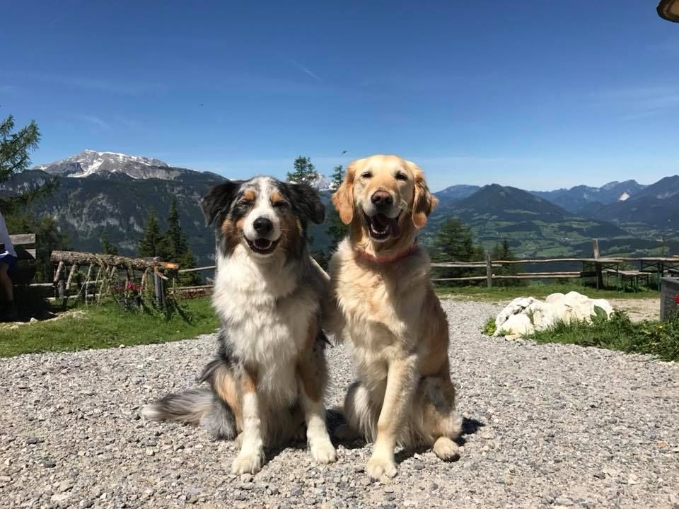 Pin Von Saturday Auf Animals In 2020 Hunderassen Haustiere Tiere Und Haustiere