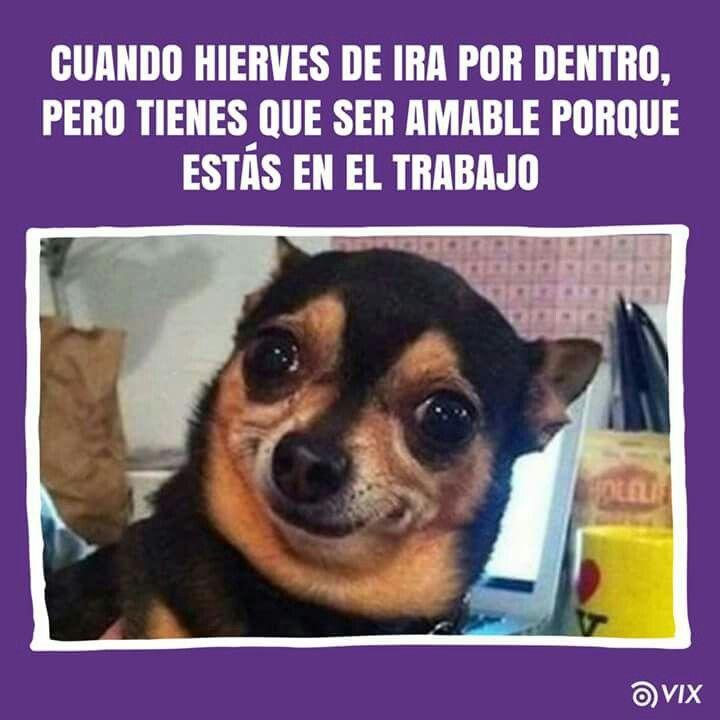 Pin De Mjh En Locuras De La Vida Memes De Perros Chistosos Memes Divertidos Sobre Perros Memes De Animales Divertidos