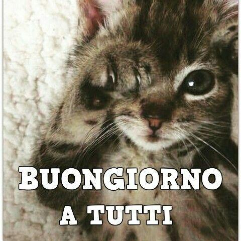 Pin di anita p pai su buongiorno buonanotte buongiorno for Buongiorno con gattini