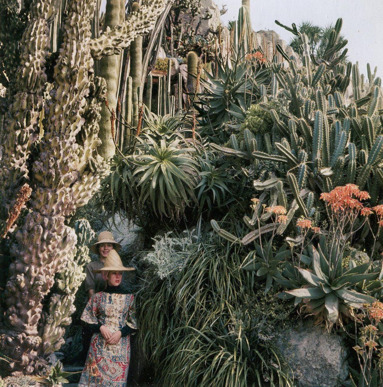 Cliff Side Plantings In Jardin Exotique De Monaco In 1964 Image