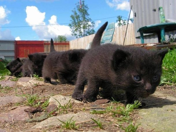 Little troopers #cute #little #troopers #entertainment #interesting