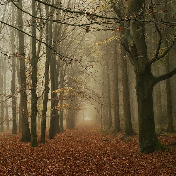Oh so Quiet by Oer-Wout