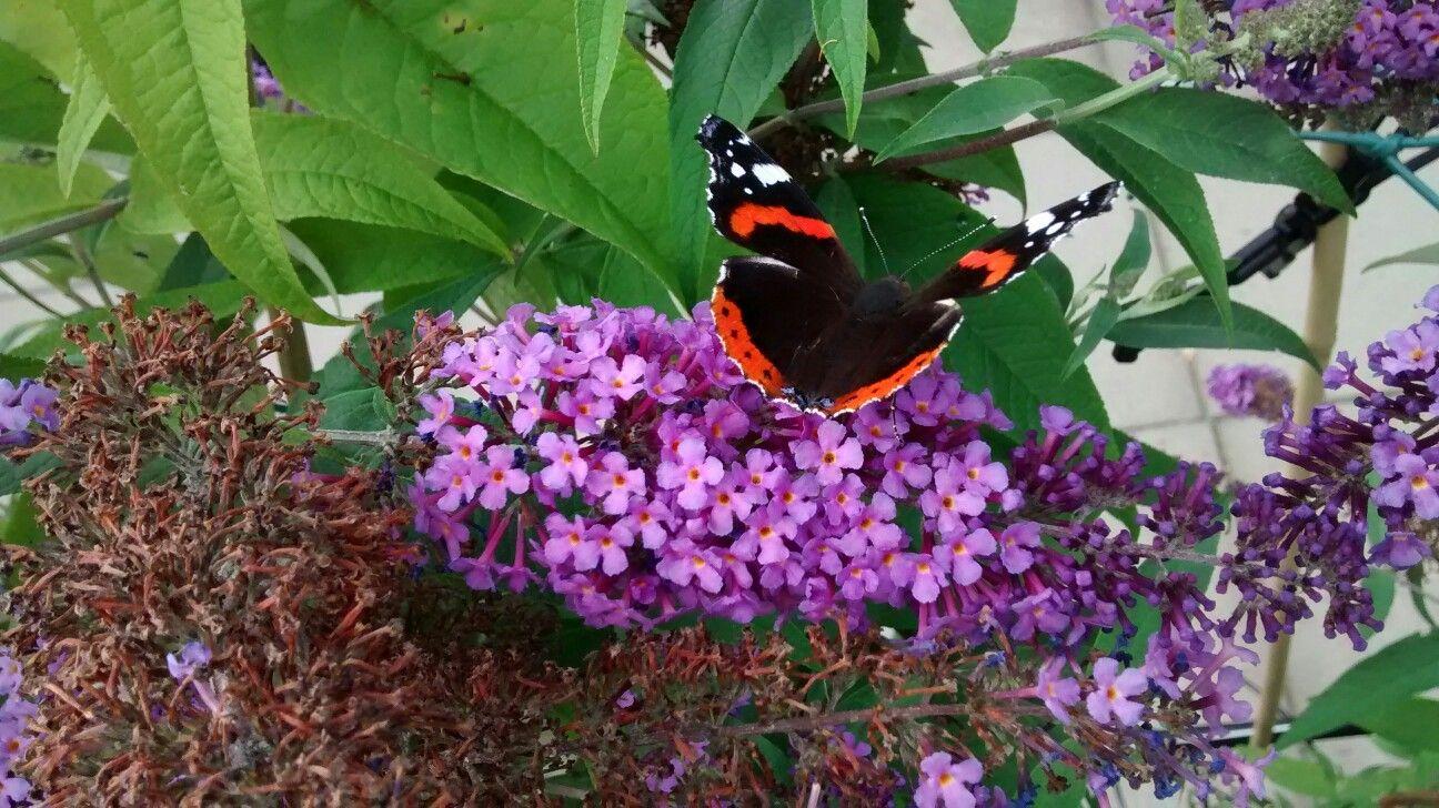 Vlinders in je tuin!